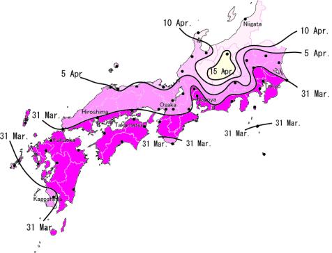 Sakura Forecast 2008